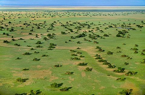 Bangweulu floodplains during dry season (aerial), Zambia
