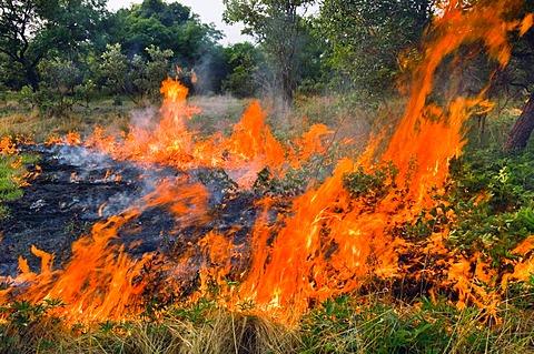 Forest fire, Senegal