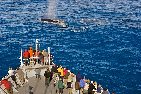 Tourists watching fin whales, Balaenoptera physalus, from cruise ship, South Georgia Island