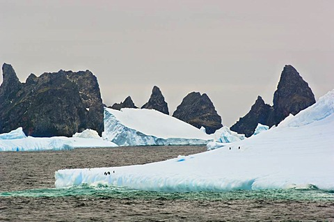 Chinstrap penguins on iceberg, Pygoscelis antarcticus, Orkney Islands, Antarctica