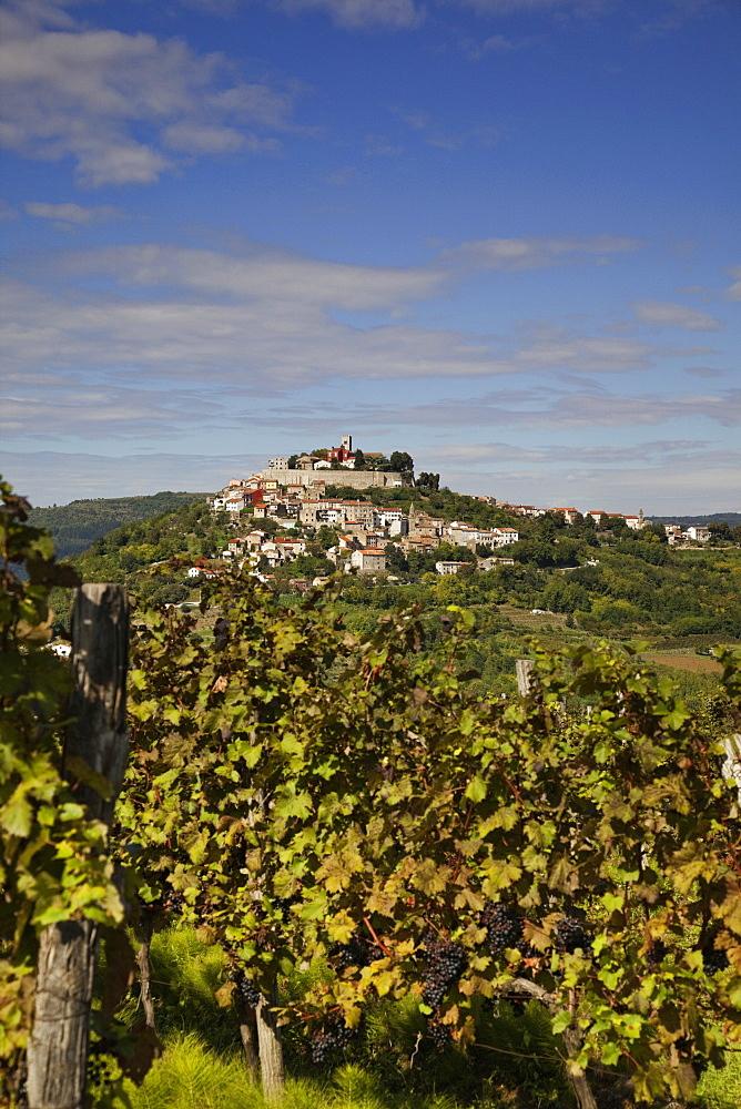 Village Motovun vine, Croatia