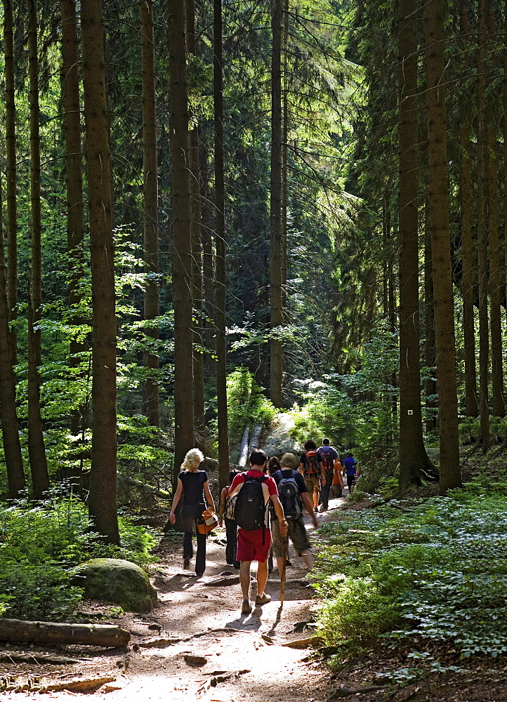 Rear view of tourist hiking at Malerweg, Saxony Switzerland Forest, Germany