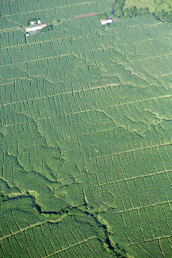 Aerial view of banana plantations in Costa Rica, Central America