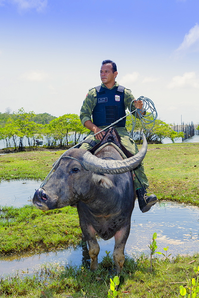Armed policeman on buffalo back on Marajo Island in the Brazilian Amazon, Para, Brazil, South America