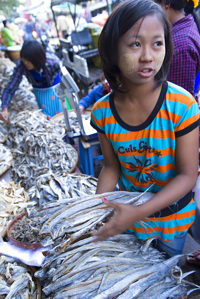 Dried fish at Monywa market, Monywa, Sagaing, Myanmar, Southeast Asia