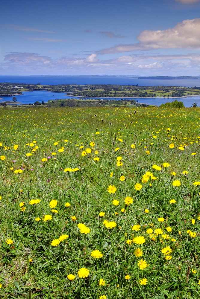 Wild meadowlands on Chiloe Island, Patagonia, Chile, South America