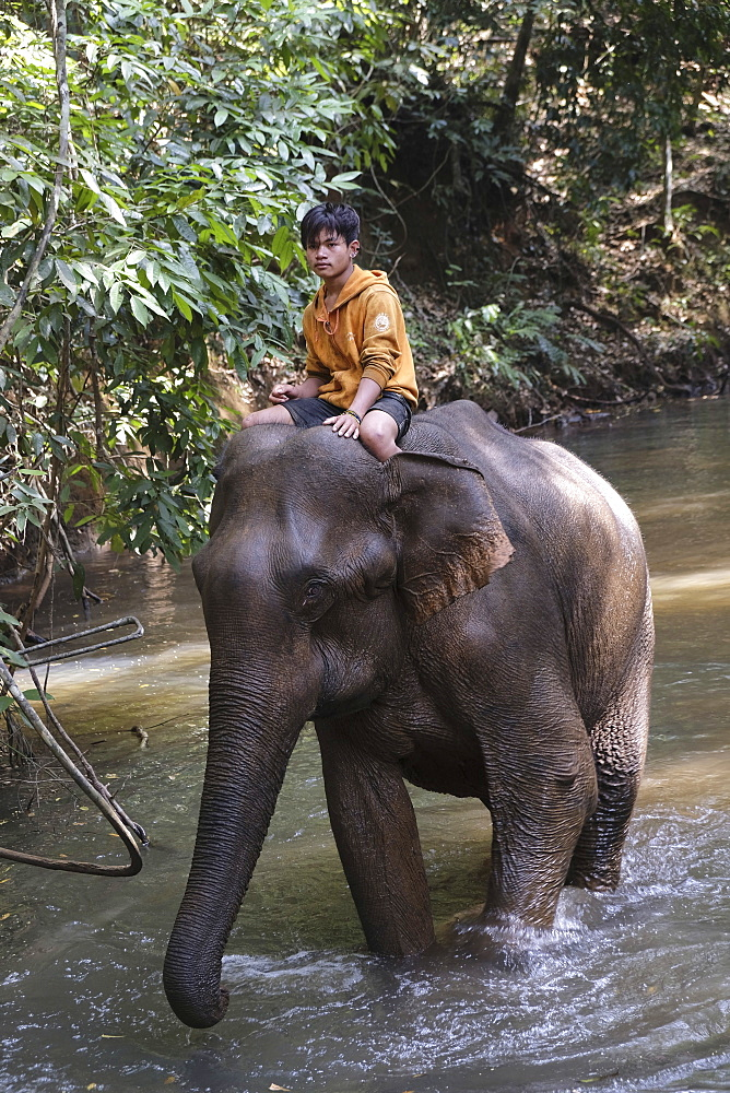Mahoot riding elephant, Elephant Sanctuary, Mondulkiri, Cambodia, Indochina, Southeast Asia, Asia
