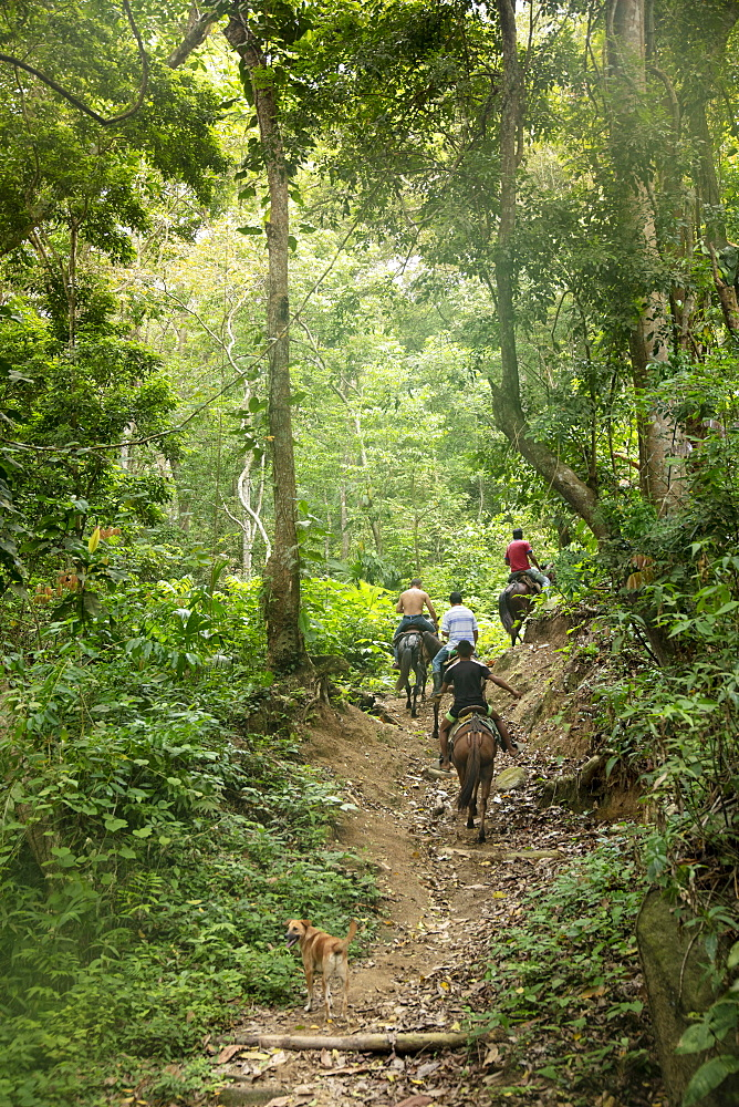 Campesinos riding horses along the Pueblito trail in the heart of Tayrona National Park, Colombia, South America