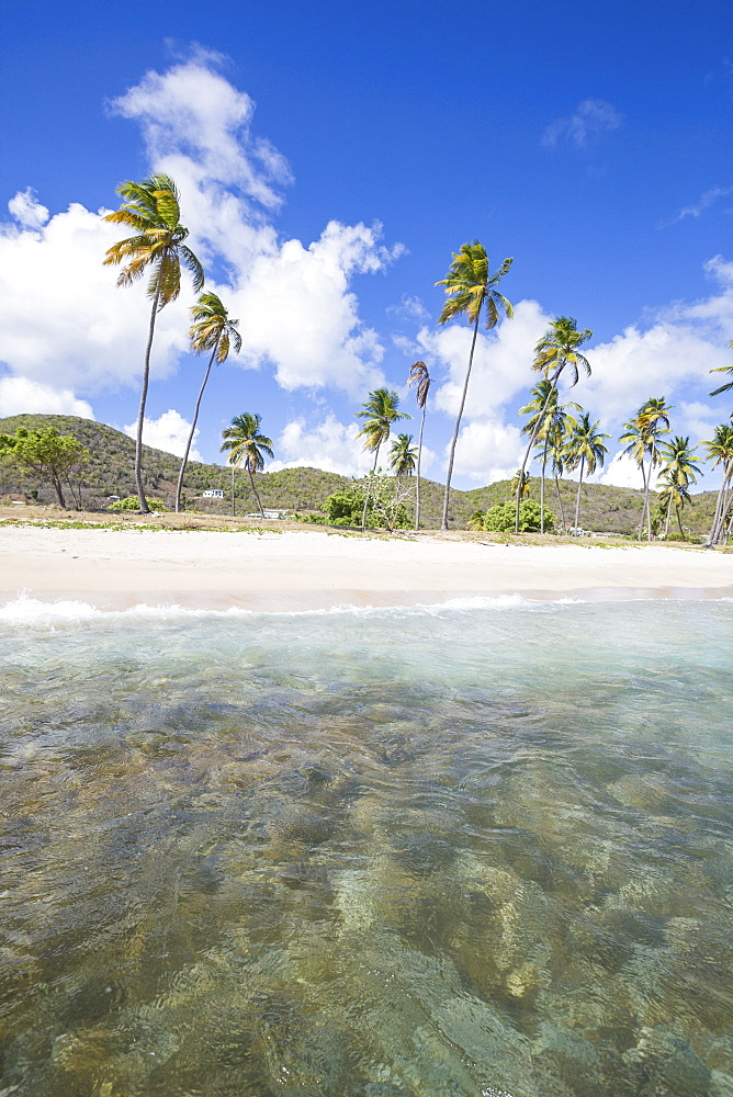 Sandy beach surrounded by palm trees and the Caribbean Sea, Morris Bay, Antigua and Barbudas, Leeward Islands, West Indies, Caribbean, Central America