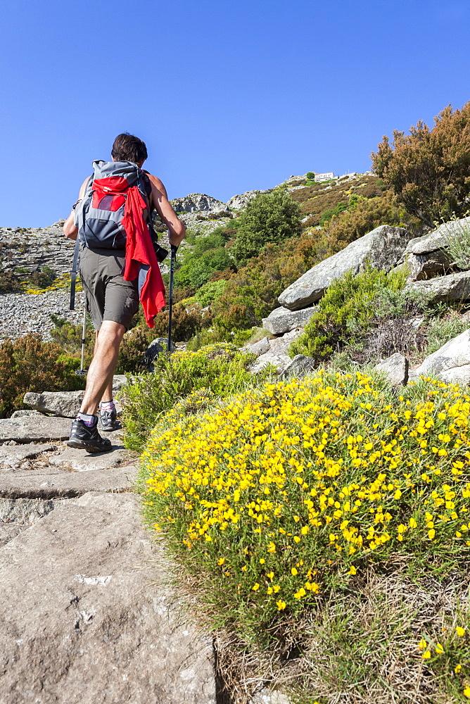 Hiker on path towards Monte Capanne, Elba Island, Livorno Province, Tuscany, Italy - 1179-2649