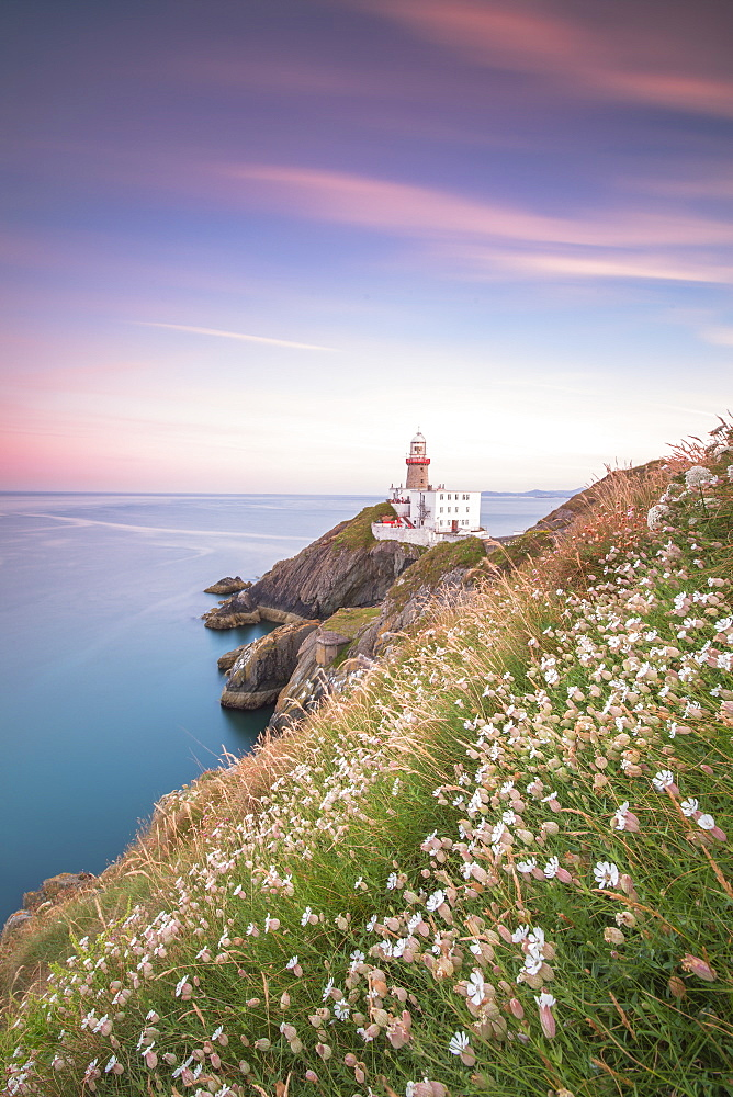 Wild flowers with Baily Lighthouse in the background, Howth, County Dublin, Ireland