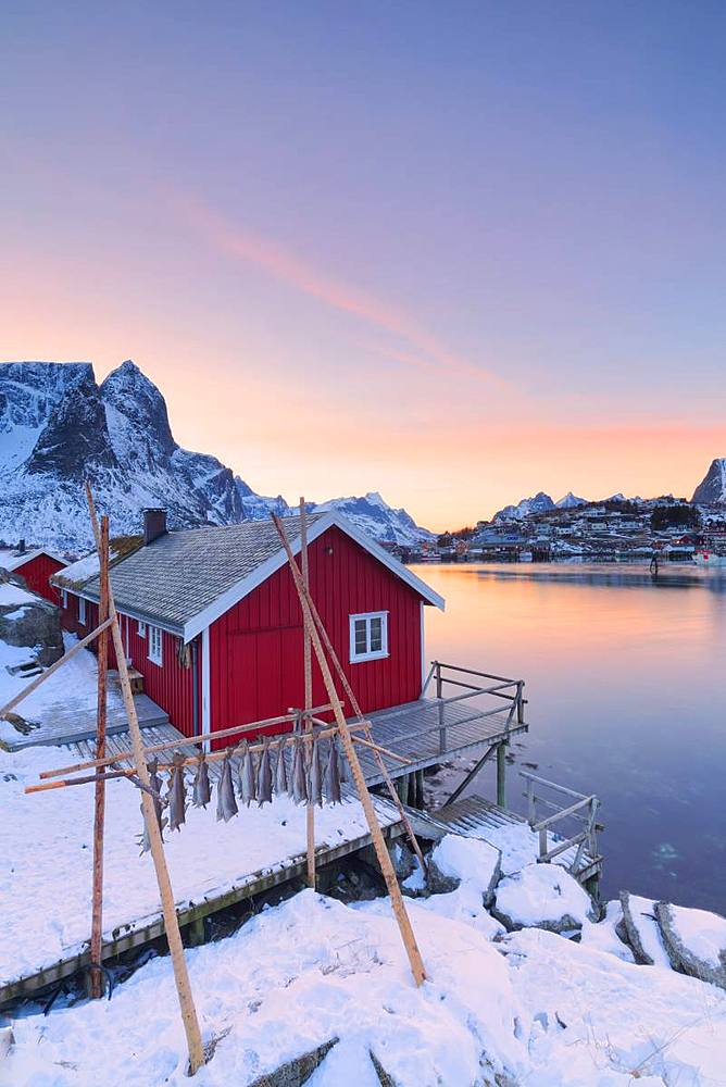Stockfish and typical fishermen's cabin (Rorbu), Reine, Lofoten Islands, Nordland, Norway, Europe