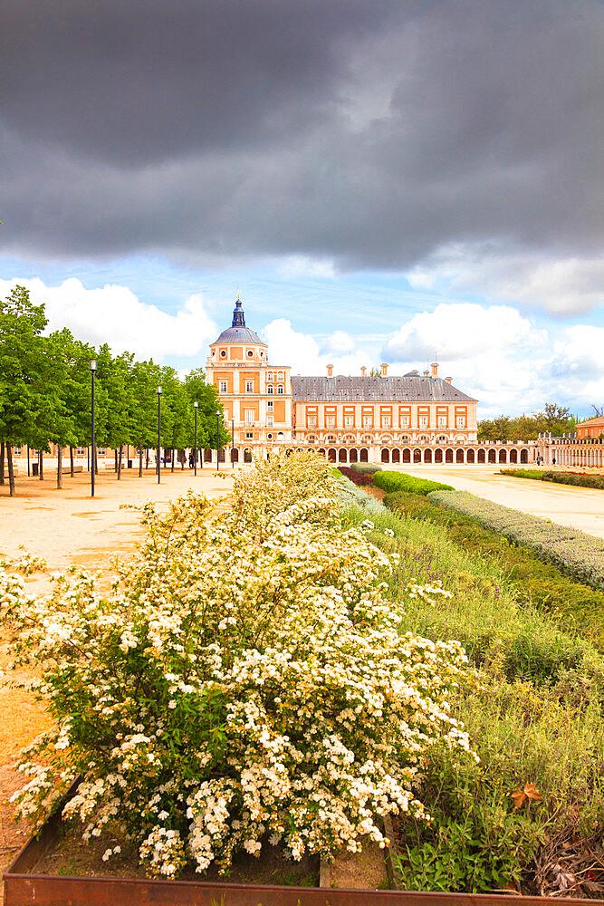 Ornamental plants, Royal Palace of Aranjuez (Palacio Real), Community of Madrid, Spain - 1179-3396