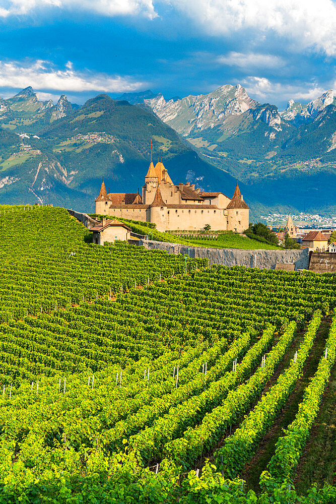 Aigle Castle and vineyards with the Swiss Alps in background, canton of Vaud, Switzerland