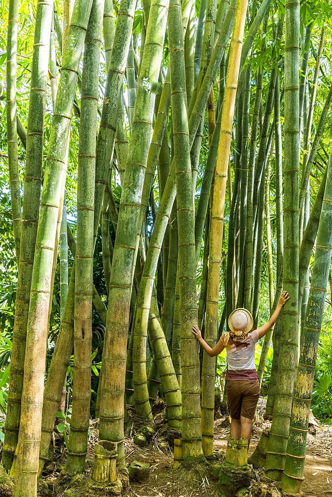 Beautiful woman looking up in the Bamboo forest, Pamplemousses Botanical Garden, Mauritius, Africa