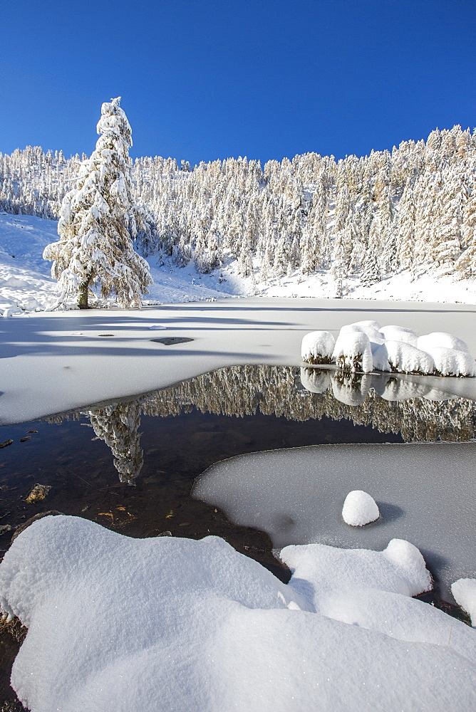 Snow covered trees reflected in the Casera Lake, Livrio Valley, Orobie Alps, Valtellina, Lombardy, Italy, Europe
