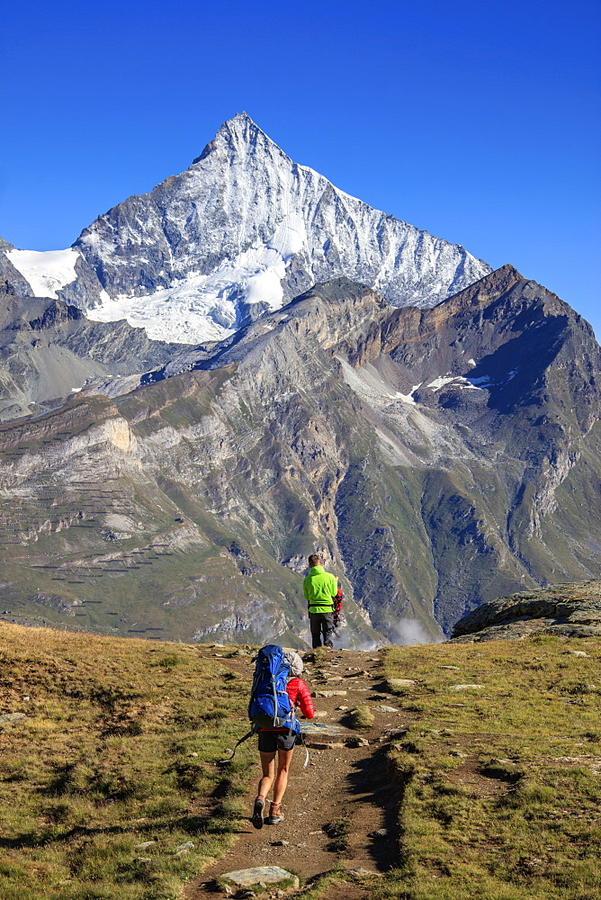 Hikers proceed towards the high peak of Dent Herens in a clear summer day, Gornergrat, Canton of Valais, Swiss Alps, Switzerland, Europe