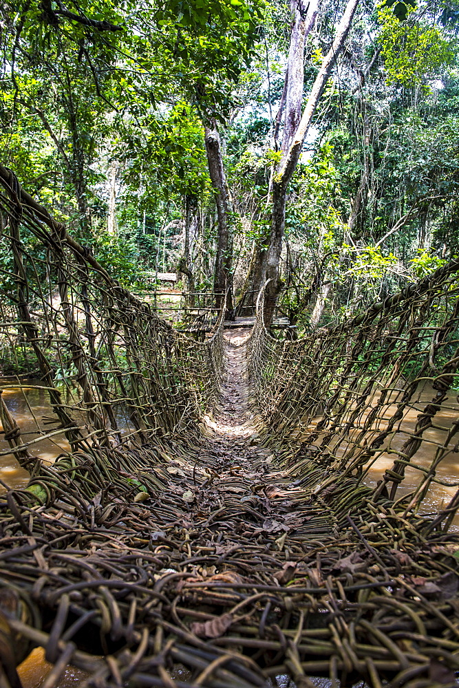 Hand made vine bridge in the Unesco world heritage sight Dzanga-Sangha Park Central African Republic - 1184-2017