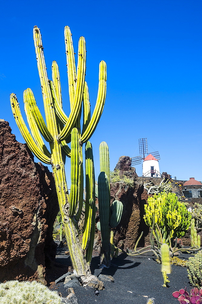 Jardin de Cactus (Cactus Garden) Cesar Manrique, Lanzarote, Canary Islands, Spain, Atlantic, Europe