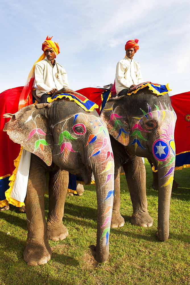Colorful elephants at the Jaipur elephant festival, Jaipur, Rajasthan, India, Asia - 1186-44