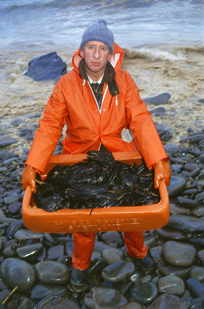 Sheshetland islands, oil disaster. Volunteer collecting birds killed by oil contamination. On 5th january 1993, the oil tanker the braer ran aground in the shetland islands spilling 85,000 tonnes of light crude oil. However, every single day of the year, roughly one-tenth of the amount of oil abroad the braer is quite deliberately flushed into the worlds seas and oceans by ships cleaning out the tanks and bilges