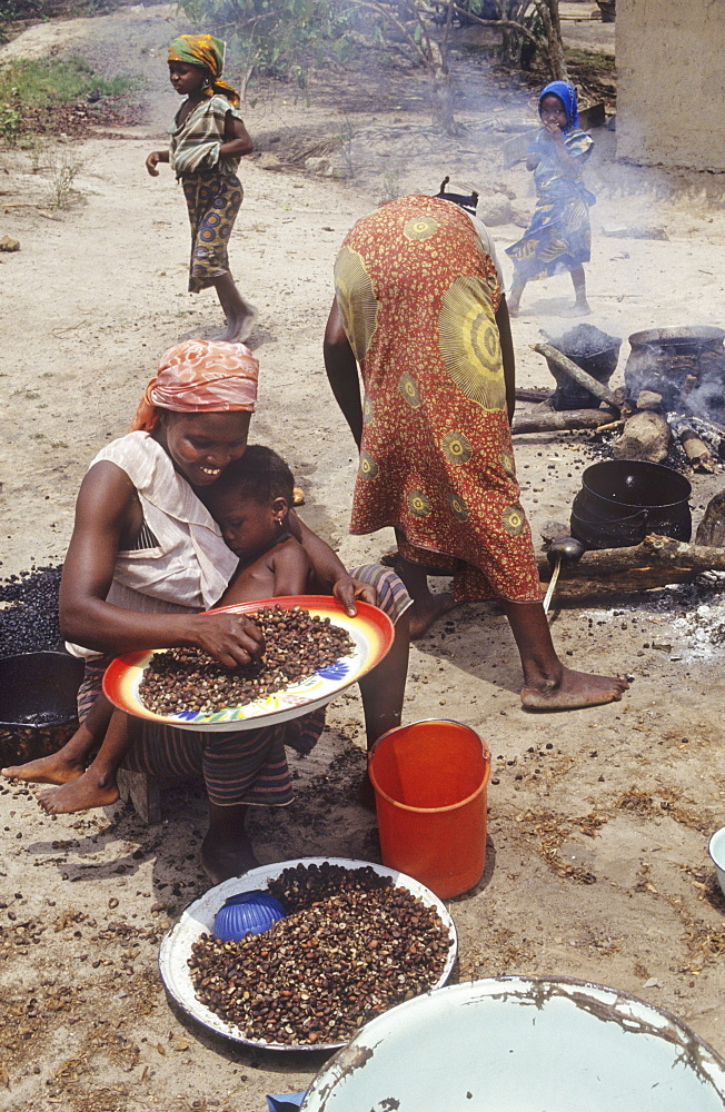 Cooking - ivory coast. Guediboua village, vicinity daloa town. Cooking the midday meal