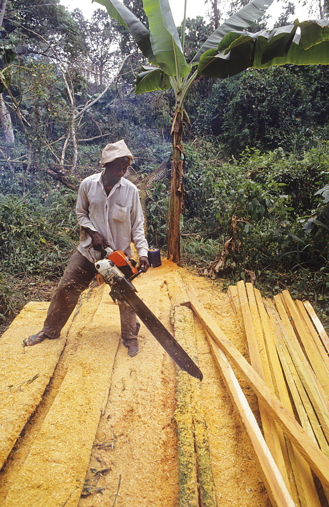 Cutting planks, cameroon. S.w. Province, mt kupe. Cutting planks to roof a house