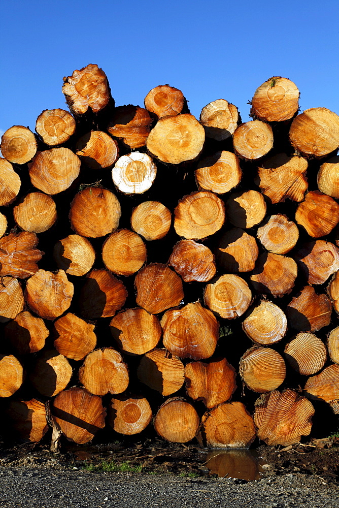 Deforestation and logs for export in a timberyard in new south wales, australia
