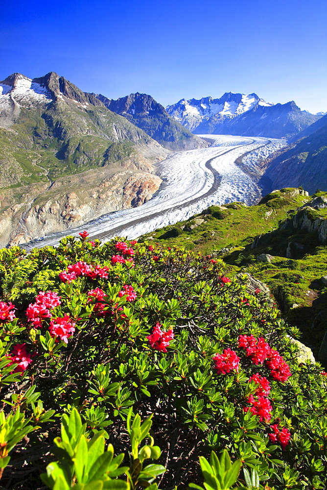 Aletsch Glacier, Swiss Alps, Switzerland