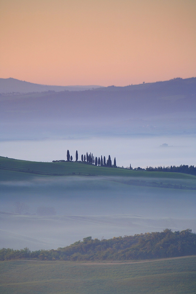 Cypress, italian cypress, cupressus sempervirens, hill countryside, agricultural landscape, tuscany. italy