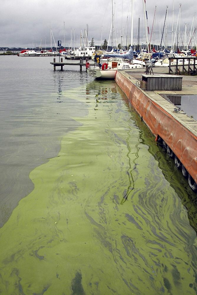Water pollution, sweden. Algae blooming in lake malaren