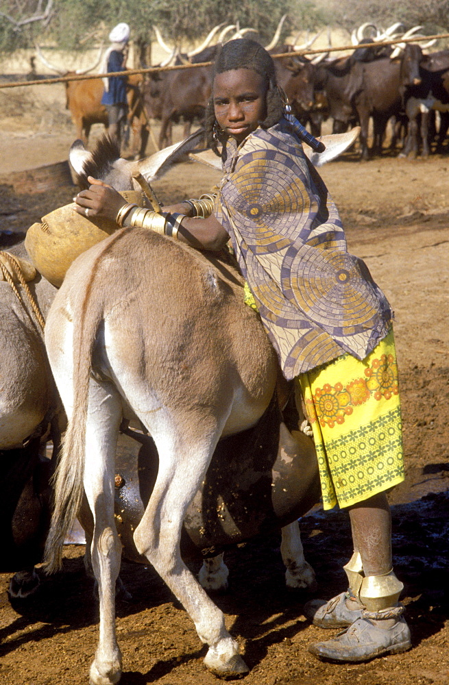 Fulani girl fetching water. the donkey carries the water in a bag under its belly. niger