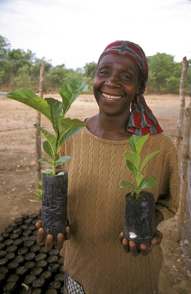 Zambia farmer, mary malenga, with green velvet beans seedlings. Near lusaka