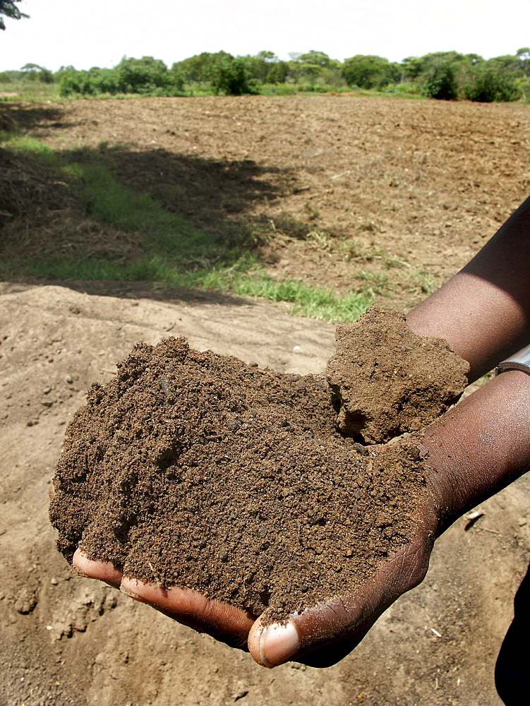 Zambia rich composted soil, kasisi