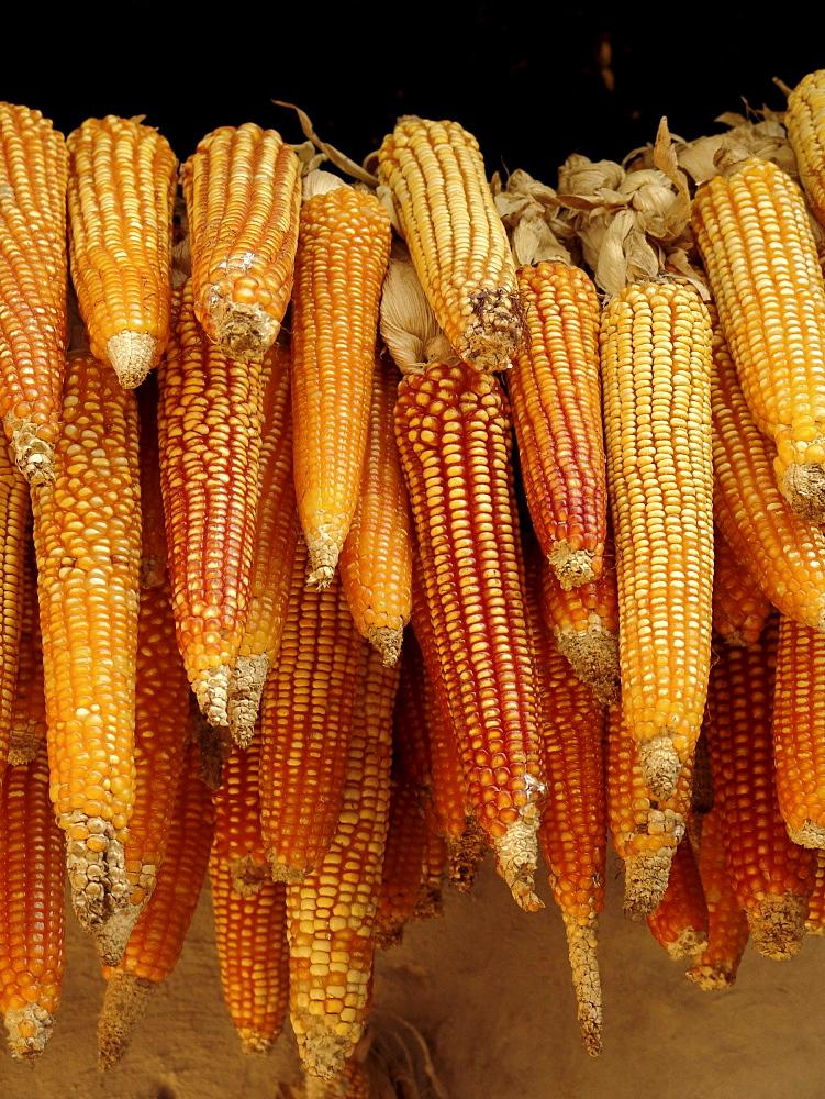 Honduras maize drying, hung up outside a farmhouse of marcala