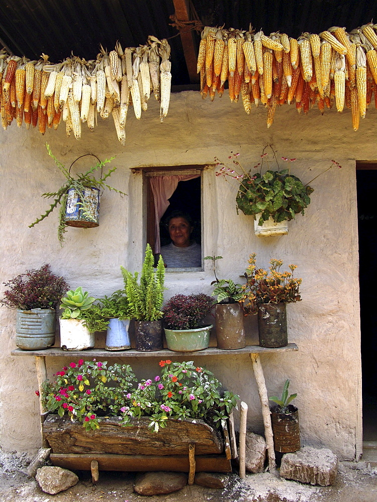 Honduras a farmhouse of marcala, with potted plants and corn cobs drying