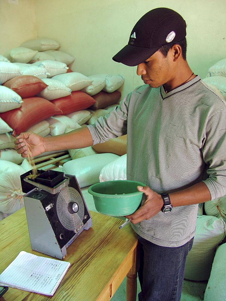 Honduras testing the humidity of coffee beans, la esperanza