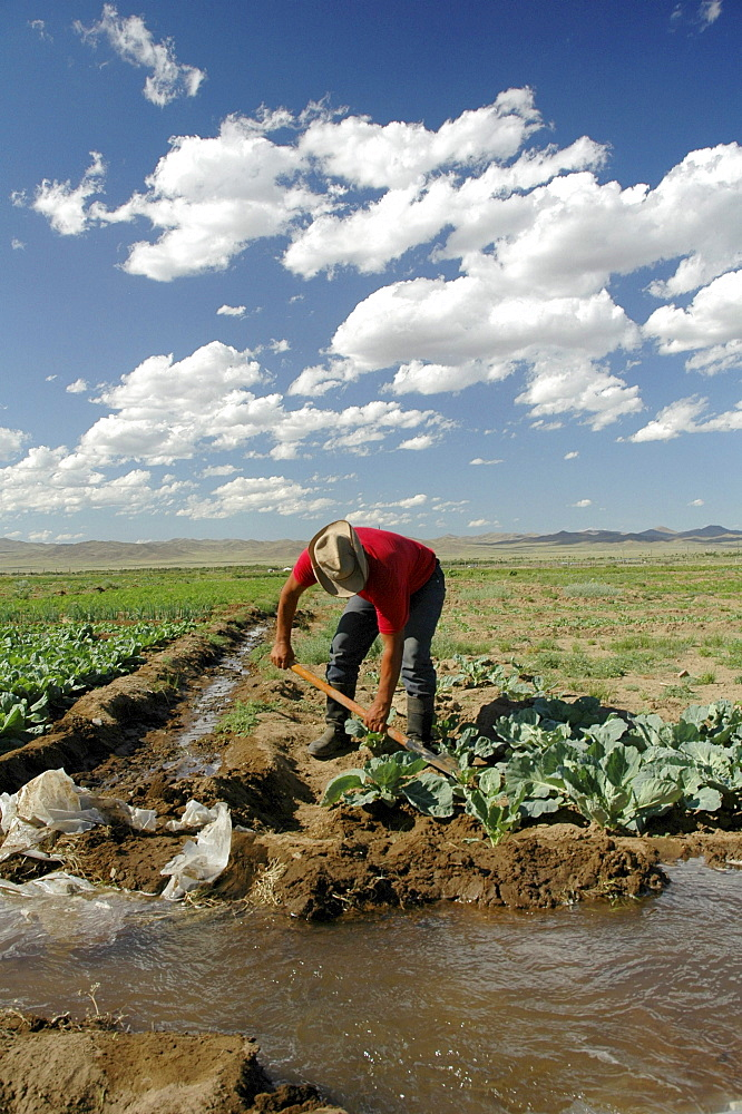 Mongolia growing vegetables using irrigation on a farm near ulaan baatar