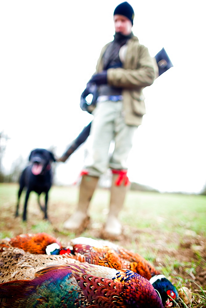 Pheasant and gun and gun dog, Oxfordshire, England, United Kingdom, Europe