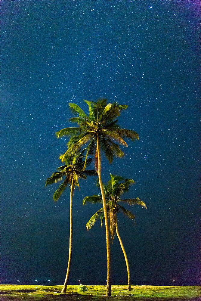 Palm trees under stars, Sri Lanka, Asia