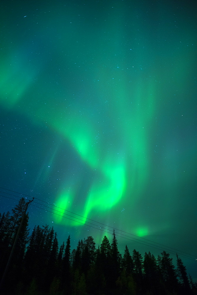 Aurora Borealis over coniferous forest at night, Muonio, Northern Finland, Finland, Scandinavia, Europe
