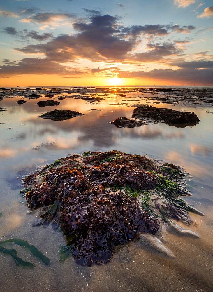 View of sandy beach and seaweed covered rock at sunset, Reculver, Kent, England, United Kingdom, Europe - 1200-47