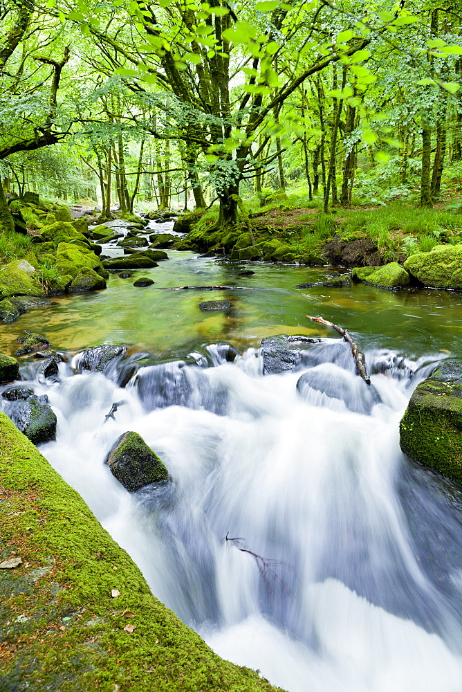 River Fowey, Golitha Falls, Looe, Cornwall, England, United Kingdom, Europe - 1207-28