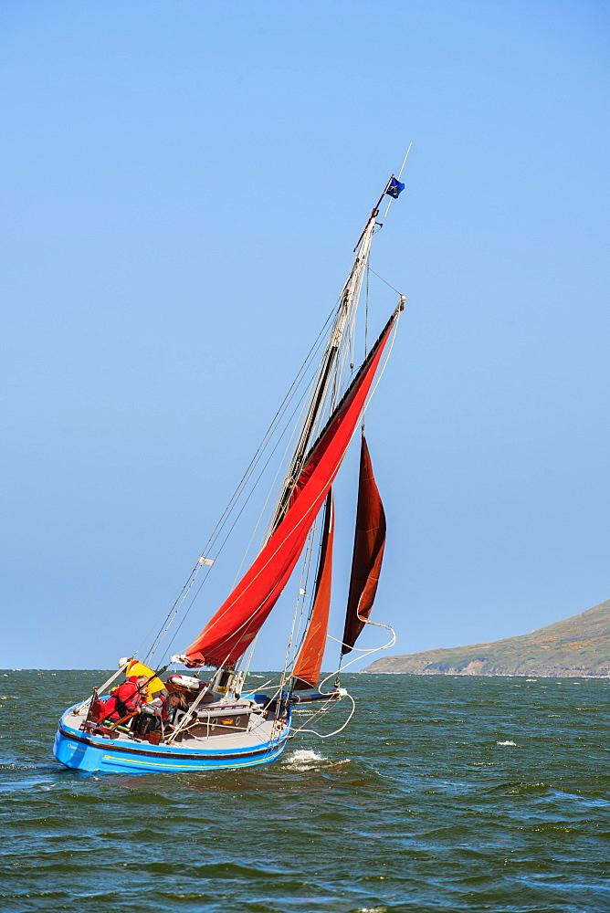 Sailing on a traditional Morecambe Bay prawn boat (prawner), United Kingdom, Europe