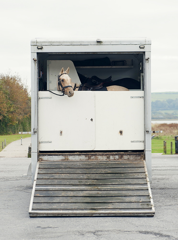 Horse peers out of a horsebox, United Kingdom, Europe