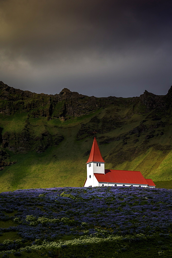 Vik church and lupine flowers, South Region, Iceland, Polar Regions - 1213-59