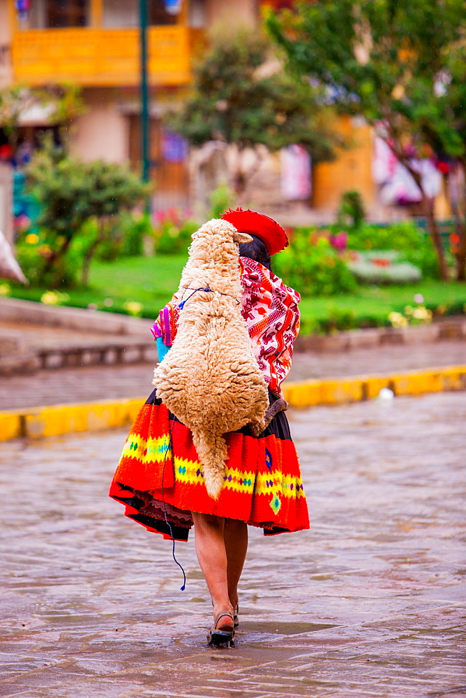 Woman carrying her sheep, Ollantaytambo, Peru, South America