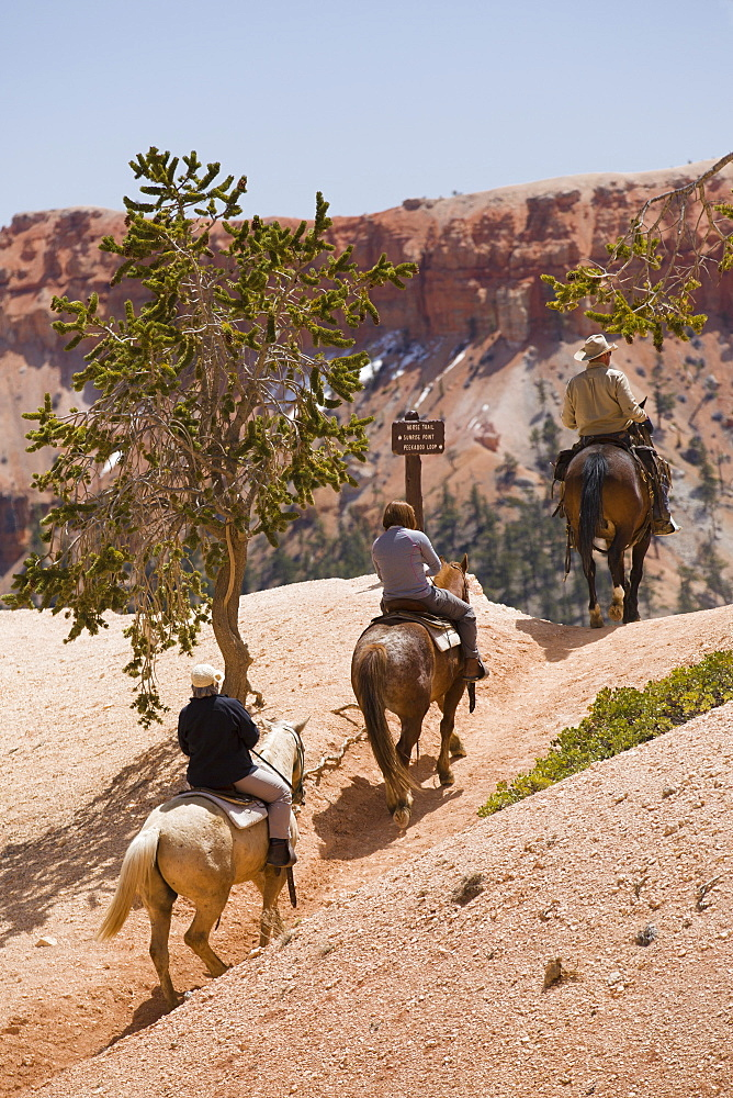 Horseback riding through Bryce Canyon National Park, Utah, United States of America, North America