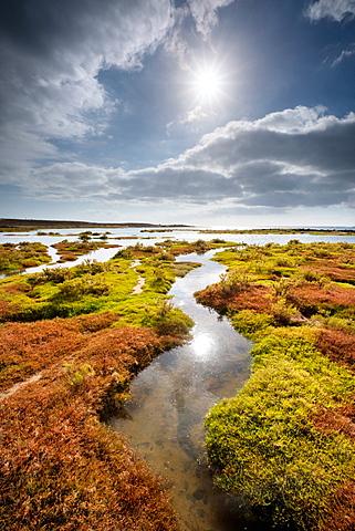 A lush green tidal lagoon on the West Coast of Lanzarote at La Santa, Lanzarote, Canary Islands, Spain, Atlantic, Europe