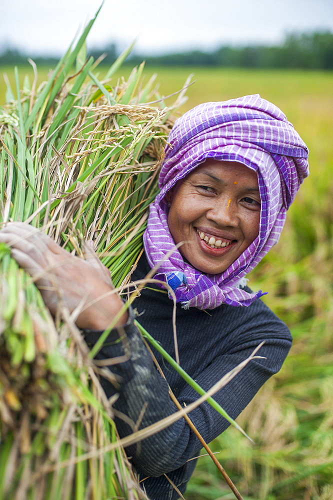 A woman carries a bundle of freshly harvested rice in north east India, India, Asia